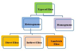 5 Types of Elisa | Their Differences and Principle Explained