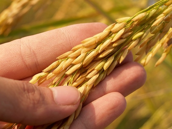 Examples ofcarbohydrates rice