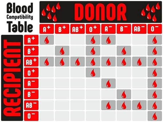 Blood compatability chart