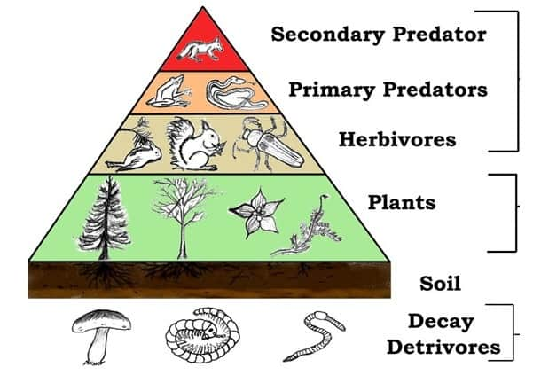 uses of plants - support food chains