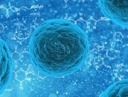 stem cell storage