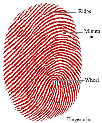 finger print recognition and image enhancement Image enhancement plays an important role in fingerprint recognition system in this paper fingerprint image enhancement method, a refined gabor filter, is presented.