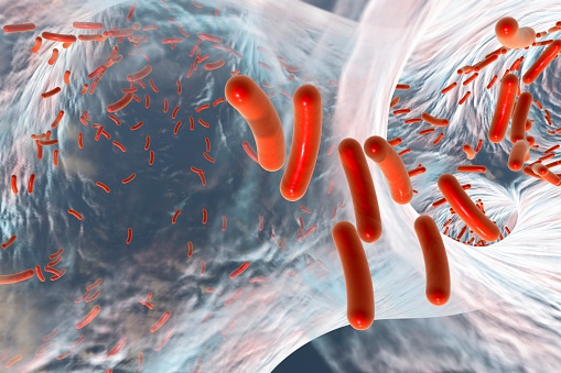 Red colored rod shaped Bacteria