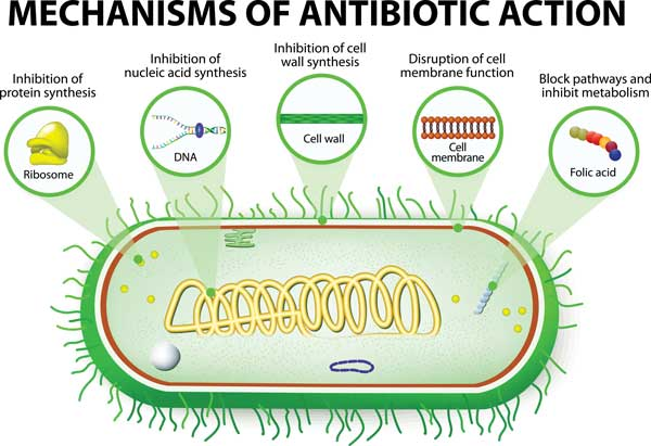 antibiotics mechanism of action