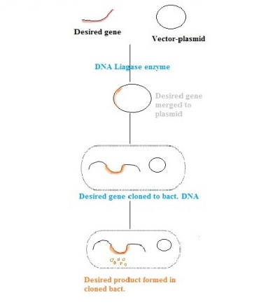 Recombinant dna technology rdna and its applications principles of recombinant dna technology ccuart Image collections