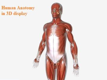 Human-Anatomy-an-example-on-how-technology-has-changed-education-1