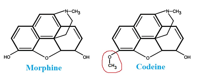 Chemical structure difference of morphine and codeine