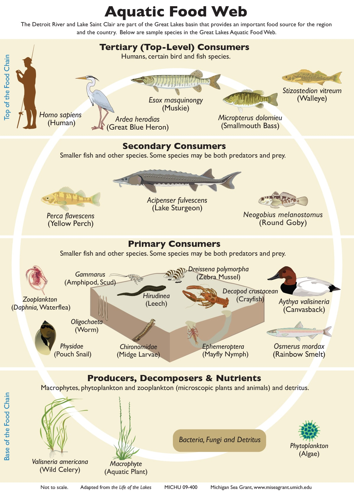 Which Organism In This Food Chain Is A Carnivore