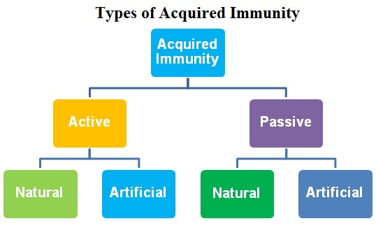 Types of immunity like acquired active passive and acquired active natural and artificial