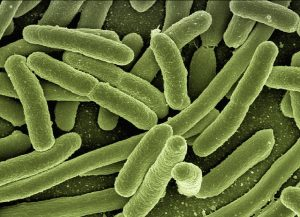 How do Bacteria Reproduce? Rapidly & Quickly