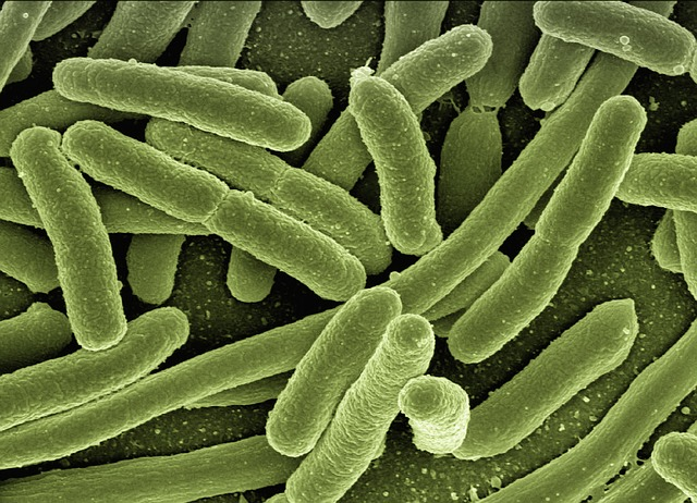 how does bacteria reproduce