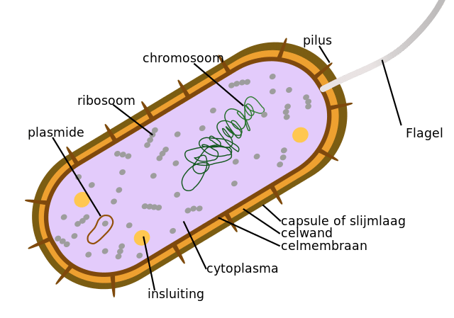 12 Characteristics of Bacteria| Morphological and Behavioral