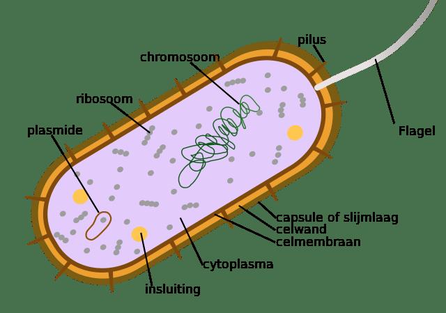 distinguishing characteristics of bacteria