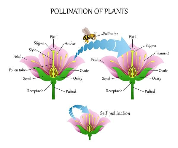insect pollination