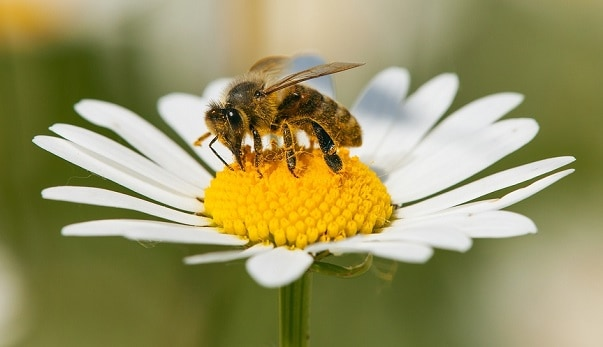 Importance of insects in pollination