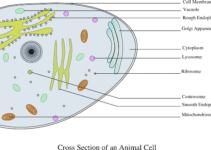# 1 Difference Between Eukaryotic and Prokaryotic cells