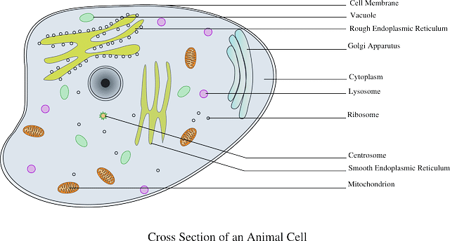 diagram plant cel 10 main differences between cell wall and cell membrane diagram plant cell 10 main differences between cell wall and cell membrane