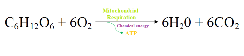 What is biochemistry of Energy production in cells