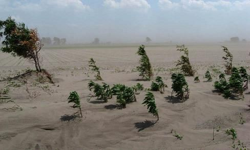 why are forests important | To prevent soil errosion