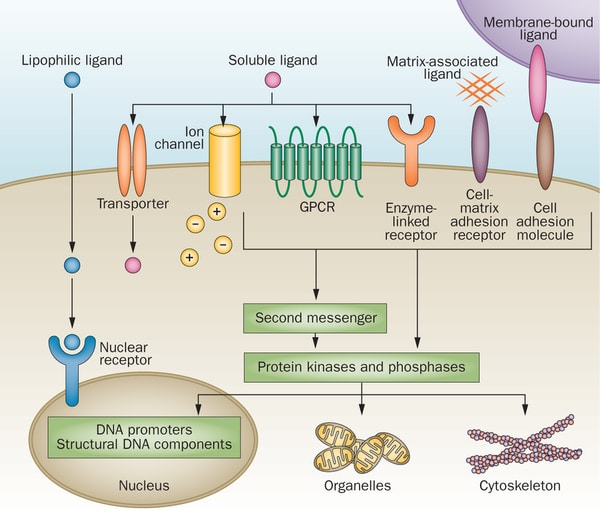 research papers on cellular signal transduction The section on molecular signal transduction investigates signal and reproduction research cellular distribution of these enzymes.