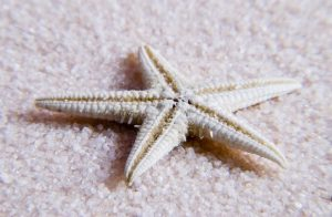 star fish another mollusc