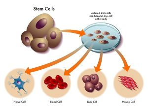 Types of Cells  In the Living Organisms & their Functions