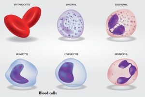 14 Types of Cells in the Human Body & their Functions