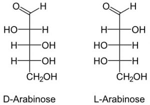 Monomer of Carbohydrates | Their Chemical Structure and Examples