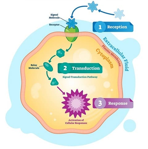 Essential Parts of a Signaling Pathway