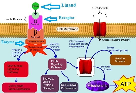 What are the Essential Parts of a Signaling Pathway-a mechanism