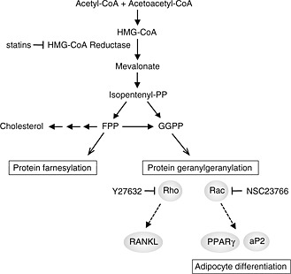 Examples of Metabolic Pathways
