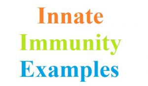 10 Examples of Innate Immunity | Their Composition and Action