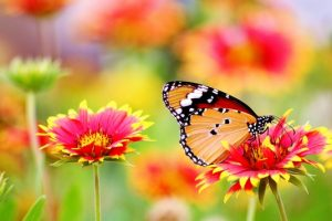 Importance of Pollination | 5 Major benefits in Life