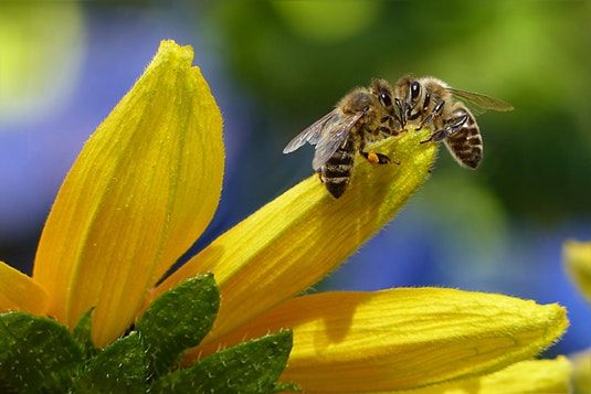 Importance of Pollination