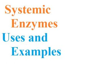 Systemic Enzymes | Their Examples and Uses