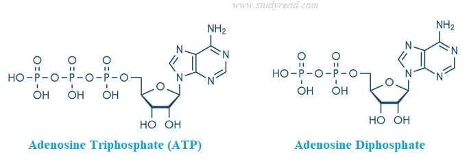 atp and adp structure