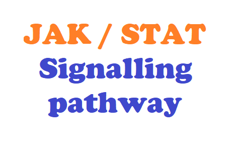 Jak STAT pathway signalling