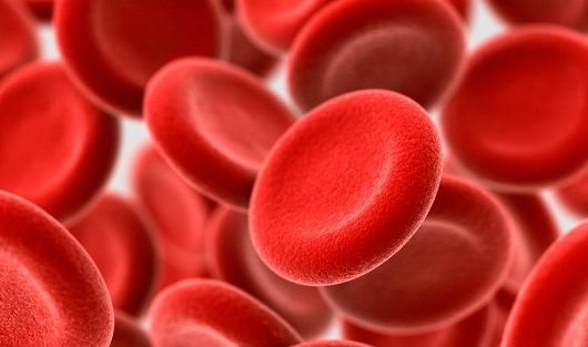 Red vs White blood cells