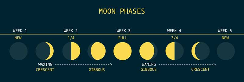 7 phases of the moon