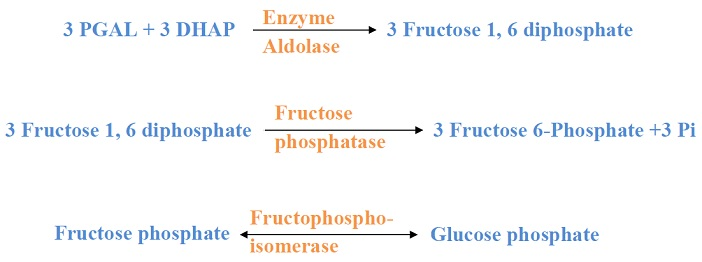 Photosynthesis steps