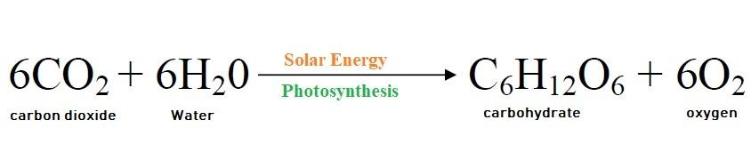 how does photosynthesis work-formula