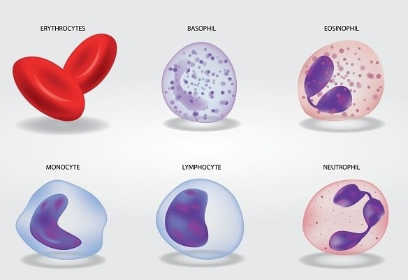 Composition of Blood - Blood cells