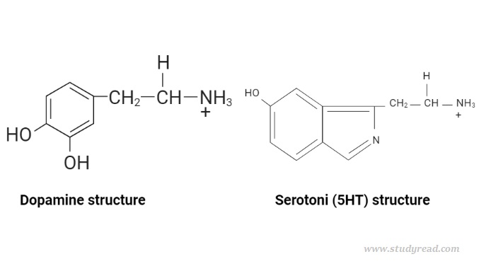Difference between Dopamine and Serotonin in structure